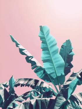 Pink Jungle by Emanuela Carratoni