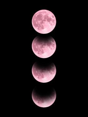 Pink Moon by Emanuela Carratoni