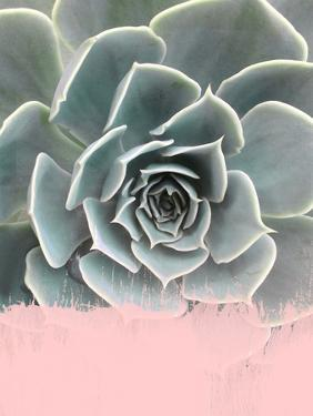 Pink On Succulent by Emanuela Carratoni