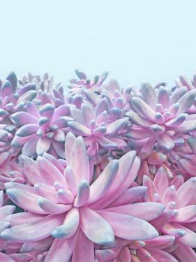 Sweet Succulent Ii by Emanuela Carratoni