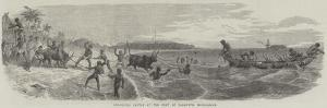 Embarking Cattle at the Port of Tamatave, Madagascar