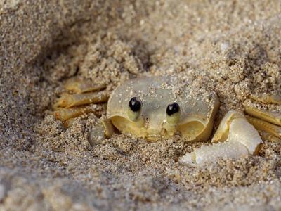 https://imgc.allpostersimages.com/img/posters/emerald-beach-sand-crab-lindergh-bay-st-thomas-us-virgin-islands-caribbean_u-L-P2465M0.jpg?p=0