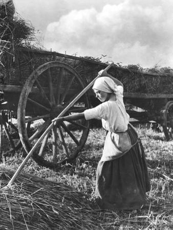 Harvester in Picardie, c.1900