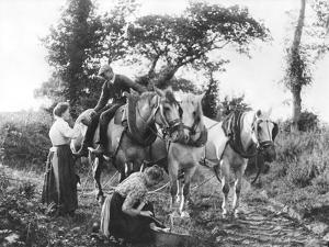 Team of Boulonnais Horses, c.1900 by Emile Frechon