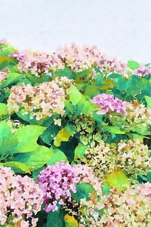 Garden Beauties I