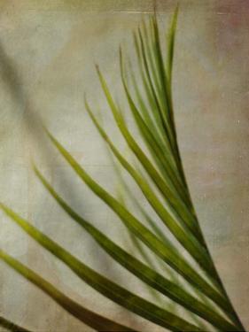 Elegant Frond I by Emily Robinson