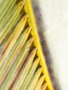 Frond Study I by Emily Robinson