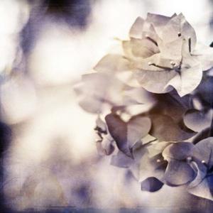 Purple Dusk II by Emily Robinson