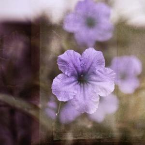 Purple Tranquility II by Emily Robinson