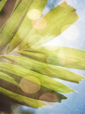 Tropical Daydream I by Emily Robinson