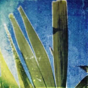 Tropical Memory II by Emily Robinson
