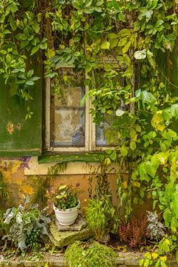 Baltic States, Estonia, Tallinn. Tallinn Old Town, city windows with vine covered entrance by Emily Wilson