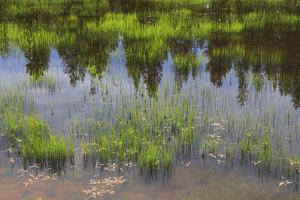 Eastern Oregon, Cascade Lakes Highway, Cascade Mountains, Deschutes NF, Crane Lake Reservoir. by Emily Wilson
