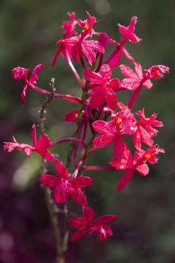 Indonesia, Bali. Eka Karya Botanic Garden, Close Up of a Flower by Emily Wilson