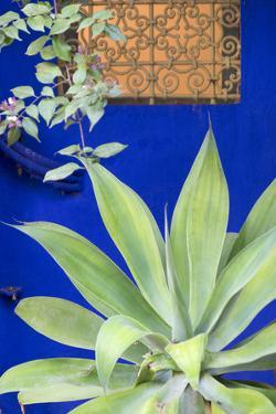 Morocco, Marrakech, Close Up of a Succulent Plant Outside a Building by Emily Wilson