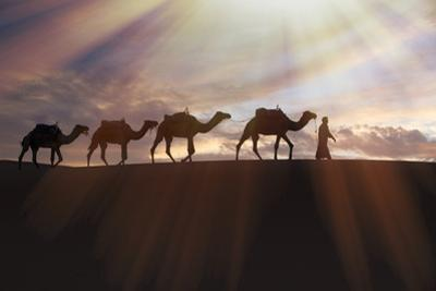 North Africa, Erg Chebbi, Dromedary camel caravan being led through desert by Tuareg man. by Emily Wilson