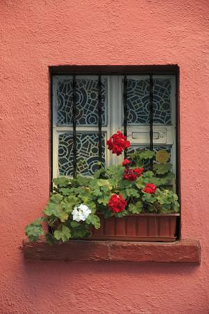 Romania, Sighisoara, residential window in old town. Flowers in window. by Emily Wilson
