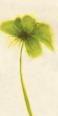 Floral Burst VII by Emma Forrester