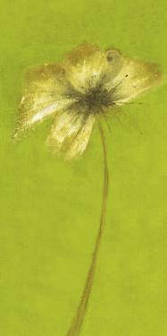 Floral Burst VIII by Emma Forrester