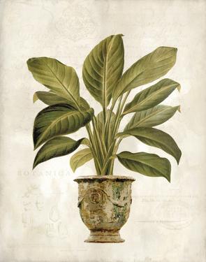 Botanica Fern by Emma Hill