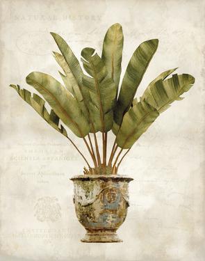 Botanica Tropical by Emma Hill