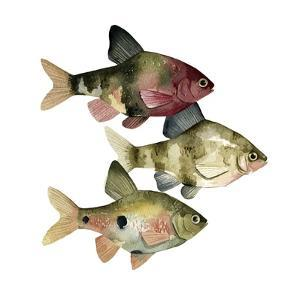 Rainbow Fish II by Emma Scarvey