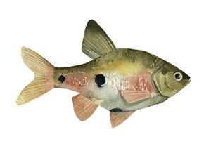 Rainbow Fish III by Emma Scarvey
