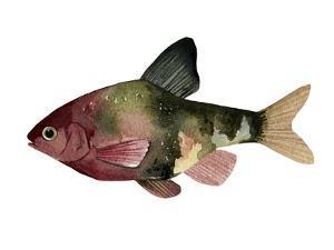 Rainbow Fish IV by Emma Scarvey