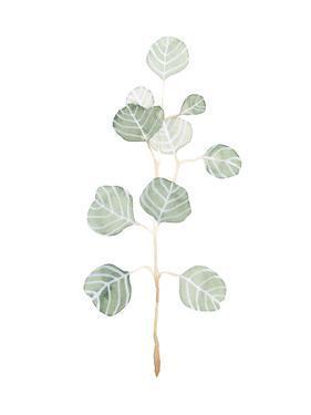 Soft Eucalyptus Branch II by Emma Scarvey