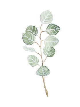 Soft Eucalyptus Branch III by Emma Scarvey