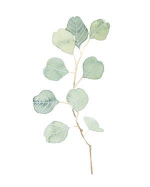 Soft Eucalyptus Branch IV by Emma Scarvey