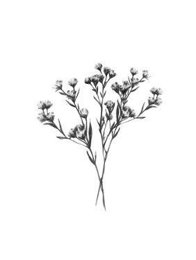 Wild Thistle Bundle II by Emma Scarvey