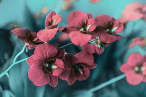 Red Orchids in Garden by Emmanuel Charlat