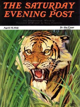 """Snarling Tiger,"" Saturday Evening Post Cover, April 19, 1941 by Emmett Watson"