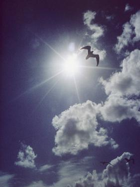 Gulls Silhouetted against the Sun by Emory Kristof
