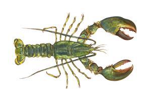 American Lobster (Homarus Americanus), Crustaceans by Encyclopaedia Britannica
