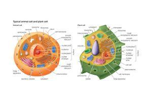 Animal Cells, Plant Cells, Eukaryotes, Biology by Encyclopaedia Britannica