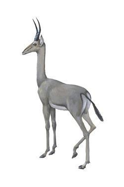 Dibatag (Ammodorcas Clarkei), Mammals by Encyclopaedia Britannica