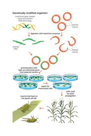 Genetically Modified Organism. Recombinant Dna Technology, Genetic Engineering, Heredity, Genetics