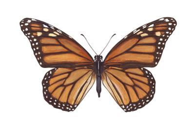 Monarch Butterfly (Danaus Plexippus), Milkweed Butterfly, Insects by Encyclopaedia Britannica