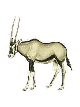 Oryx (Oryx Gazella), Mammals by Encyclopaedia Britannica