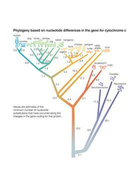 Phylogeny Based on Differences in the Protein Sequence of Cytochrome C in Organisms by Encyclopaedia Britannica