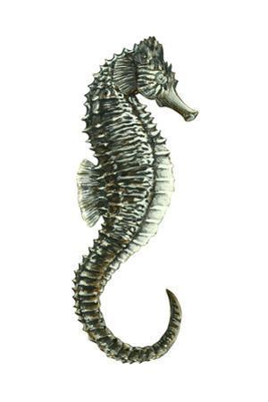 Sea Horse (Hippocampus Hudsonius), Fishes by Encyclopaedia Britannica