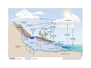 Water Cycle, Atmosphere, Earth Sciences by Encyclopaedia Britannica