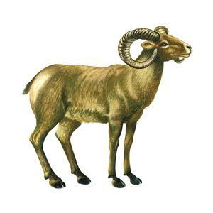 Wild Sheep (Ovis Canadensis), Mammals by Encyclopaedia Britannica