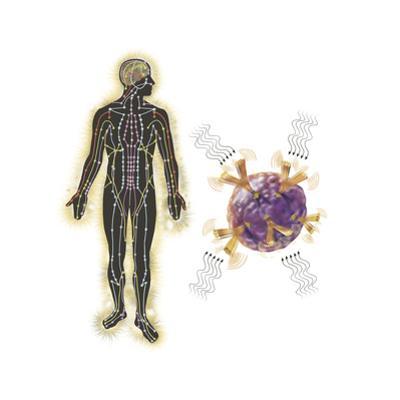 Energy Meridians of the Human Body