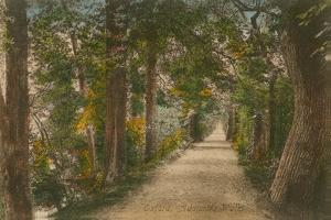 Addison's Walk, Oxford. Postcard Sent in 1913 by English Photographer