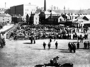 Cattle and Wholesale Market, Kidderminster, 1900 by English Photographer