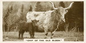 Comic Animals, Chip Of The Old Block (b/w photo) by English Photographer
