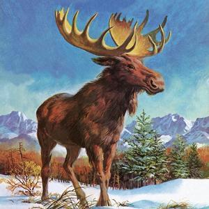 Alaska's Mighty Moose by English School